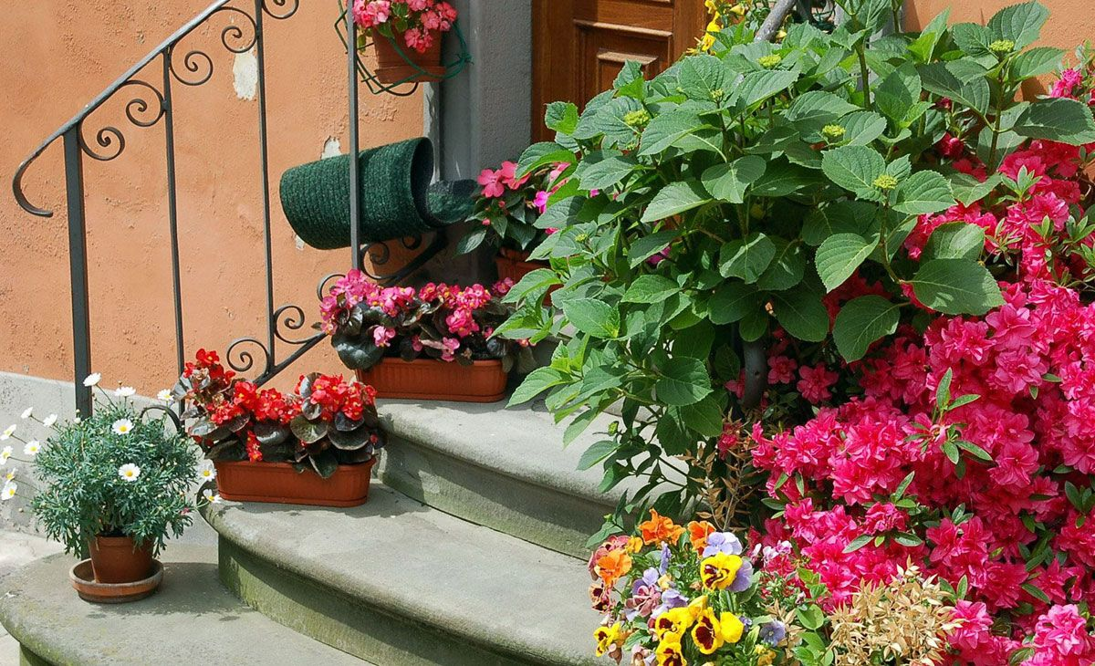 Фото цветов в горшках на крыльце