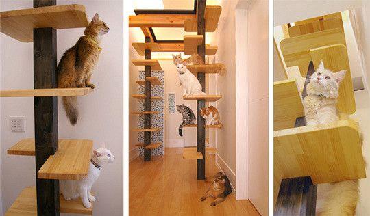 Сделать своими руками лесенку для кошки 7