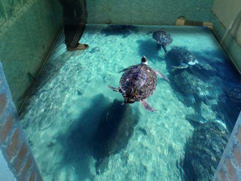 Это не бассейн, а голографическое изображение на наливном полу
