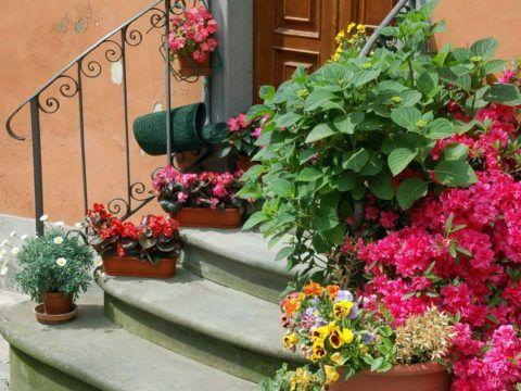 Крыльцо и цветы
