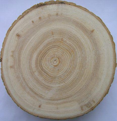 На торцевом срезе хорошо просматривается и текстура и фактура древесины