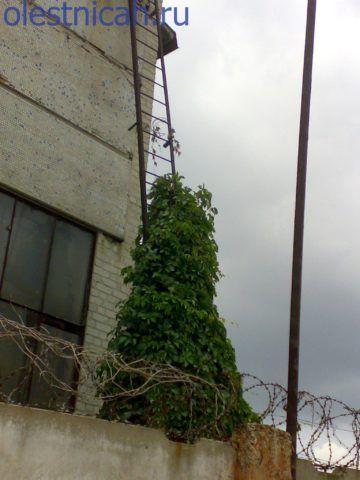 Очень часто стационарные лестницы на объектах находятся в таком состоянии, тогда на помощь приходят ручные лестницы