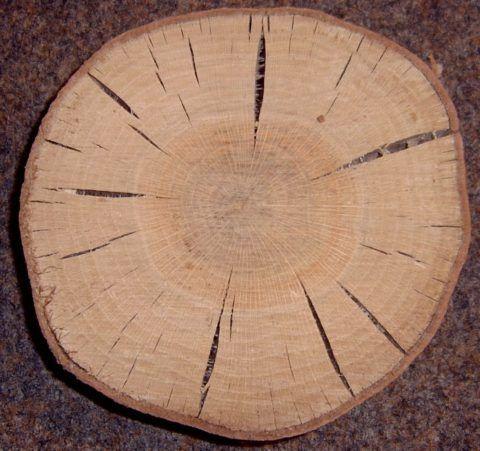 Явления растрескивания деревьям такого типа так же присущи, но в несколько меньшей степени