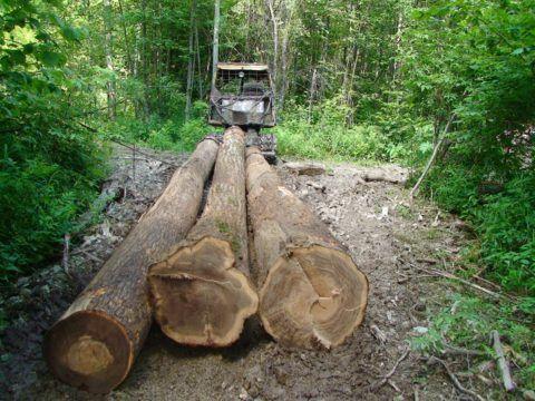 Древесина - это экологически чистый материал