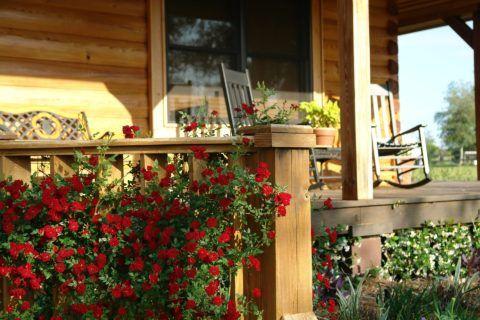 Натуральная древесина органично сочетается с живыми растениями