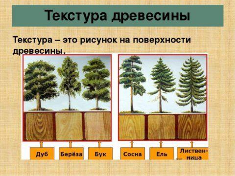 Значение имеет не только текстура, но и плотность древесины