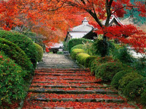 Простота и единение с природой – основополагающие принципы японской национальной культуры